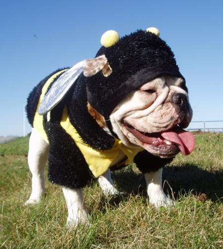 Gertie_Bee2